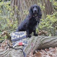 Oilcloth Dog Walking Bag In Leaf Fabric