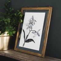 'Cattleya' Vintage Botanical Illustration Print