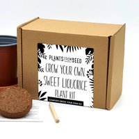 Complete Grow Your Own Sweet Liquorice Plant Kit
