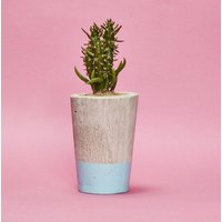 Concrete Pot Tall With Cactus/ Succulent In Baby Blue