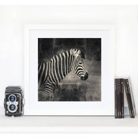 Zebra Black And White Print