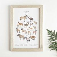 Antelope Animal Print