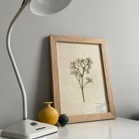 Gypsophila Real Pressed Flower Herbarium Art