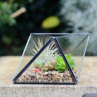 Geometric Succulent Air Plant Terrarium Diy Kit