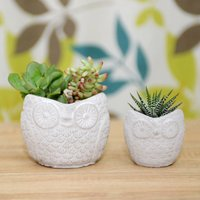 Concrete Owl Shaped Planter