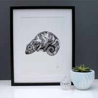 The Curious Chameleon Limited Edition Print
