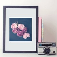 Flower Rose Hydrangea Pink Photography Print