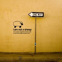 I am not a sheep Wall Sticker, White/Golden Yellow/Yellow Orange