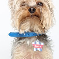 Personalised Stripe Pet Tag Star Shaped, Black/White/Blush