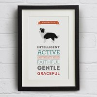 Border Collie Dog Breed Traits Print