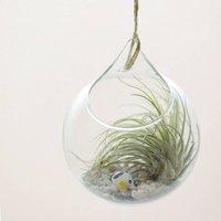 Hanging Glass Orb Air Plant Terrarium