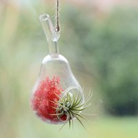 Hanging Glass Pear Air Plant Terrarium