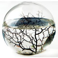 EcoSphere - Small - Prezzybox Gifts