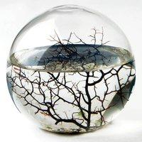 EcoSphere - Medium - Prezzybox Gifts