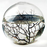 EcoSphere - Extra Large - Prezzybox Gifts
