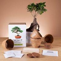 Grow it - Bonsai Tree - Prezzybox Gifts