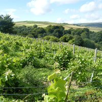 Chilford Hall Vineyard Tour and Tasting with Lunch for Two in Cambridgeshire - Food Gifts