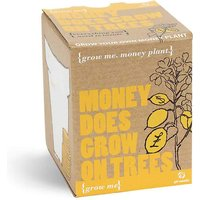 Grow Me - Money Does Grow on Trees - Prezzybox Gifts