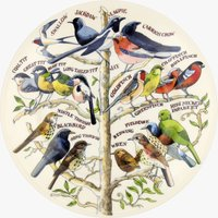 Seconds Garden Birds 8 1/2 Plate