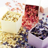 Freeze Dried Delphinium Petals Pack - Pastel Pink