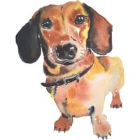 Illustrated Watercolour Sausage Dog Just A Note Card, Square Card Size By Moonpig