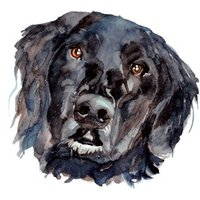 Illustrated Watercolour Dog Black Labrador Just A Note Card, Square Card Size By Moonpig