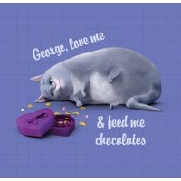 Universal Secret Life Of Pets Feed Me Chocolate Personalised Card, Square Card Size By Moonpig