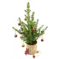 Little Christmas Tree - flowers - Arena Flowers Gifts