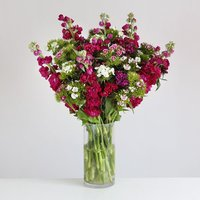Scented Stocks and Sweet Williams - flowers - Flowers Gifts