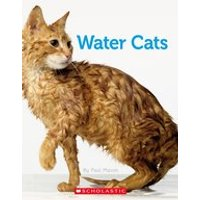 Water Cats x 6