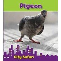 City Safari: Pigeon
