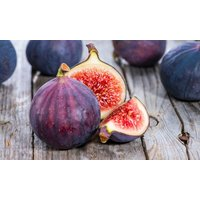 Fig Tree - Patio Standard Fig Tree - Ficus carica - 120cm tree