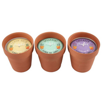 Fragranced Flower Pot Candle Pack Of 12