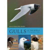 Gulls of the World : A Photographic Guide