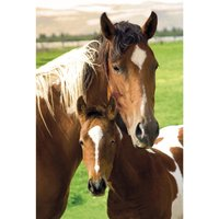 Horses Mare and Foal Poster