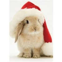 Santa Bunny Holiday Half Notecard