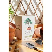 Grow It Bonsai Tree Kit, assorted