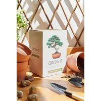 Grow It Bonsai Tree Kit, Assorted