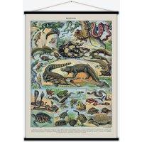 Reptiles Vintage Print
