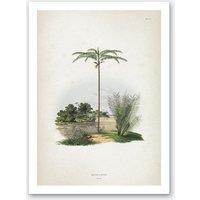 Vintage Martius 1 Oenocarpus Bataua Art Print