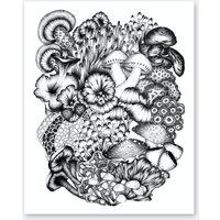 A Medley Of Mushrooms Print