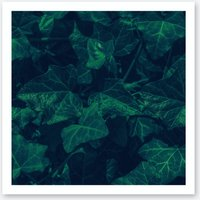 Ivy In The Park Art Print