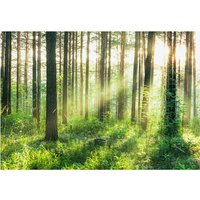 Morning Forest Wall Mural