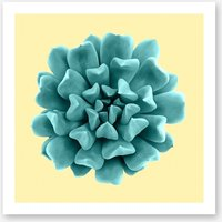 Cyan Succulent Plant on Yellow