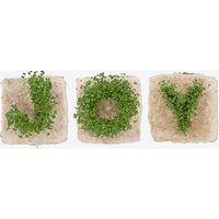 Plant Growing Paper (JOY)