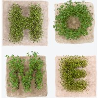 Plant Growing Paper (HOME)