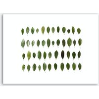 Leaves Collection Art Print