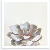 Pink Succulent Print