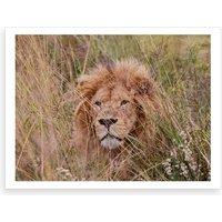 Lion Male Color Art Print