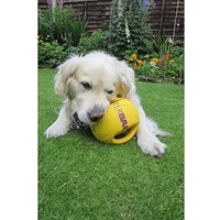Interball with Swing Tag Label Dog Toy